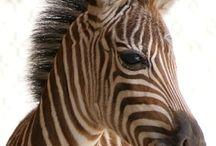 I need a zoo / by Elizabeth Foose