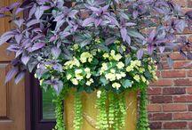Container garden / by Becky Ingram