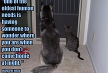 Cats and Dogs / by Social Abundance Marketing