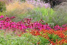 Mein Garten explodiert / Inspiration für meine Pflanzen-Sammel-Leidenschaft / by Eva Ritzrow