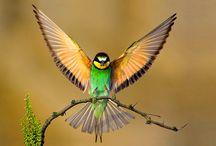 Shaman / Hummingbirds / by Amie