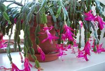 house plants / by Cheryle Fysh