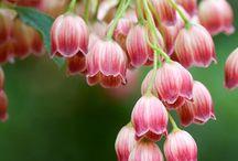 In Bloom / by Heather Stevens