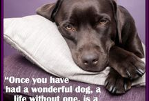 Dog quotes / by Jacqueline Randall