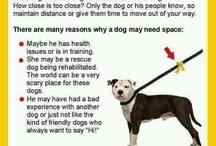 All Things Pets - Dogs & Cats / by Candy Bowdry