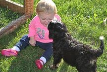 Bernedoodle (Bernese Mountian Dog/ Poodle) Pics / Pictures of my past and present Bernedoodle Puppies / by Kandi Williams