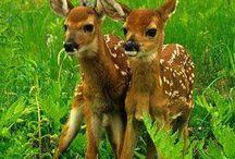 Too Cute / by * Kendle *