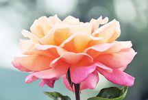 Flowers I love / by Tammy Marshall McKenna