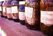 Herbalism / by Nicola Ostara Naumann
