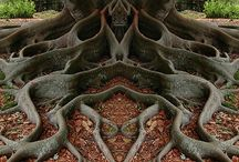 TREES / TREE ART / WOODEN SCULPTURES / by Tovan Huynh