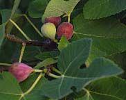 Edible Gardening / by Tina T Minus, T Plus
