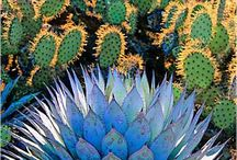 Cactus  / by Alma Mayorga