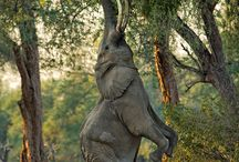 All about ELEPHANTS / by Connie Thelen