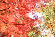 Autumn / by Michiko M