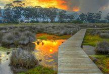 Photography > Boardwalk / by Sherry Hopkins