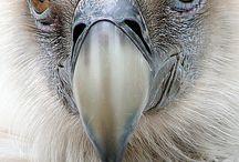 birds / by Carol Myatt
