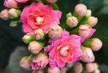 flower / by Vien tham my Milan