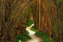 Take the Path / by Karen Case