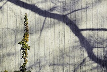Farm and Scenery-jzdesignandphoto.com / by Jennifer Zduniak