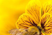 Mellow Yellow / by Sharon Marrero