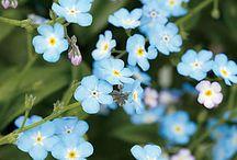 Flowers / by Debbie Smith