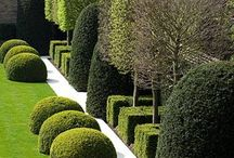 Topiary and mazes / by Margo Bangert