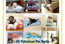 Pet Idea  / by Oraya
