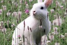 Bunnies / by Pam Matthews