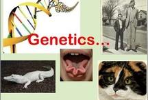 Genetics unit / by Brandi Matthews