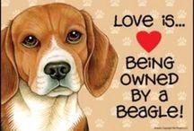 Beagles  / by Bernice Abeyta-Albert