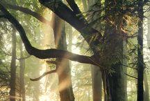 Trees / by TGBTG