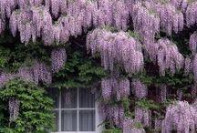 ~Lavender, Lilac, Amethyst & Purple~ / by Cici Bianca
