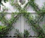 Vertical Gardening / by Paul J. Ciener Botanical Garden