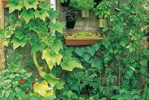 Gardening / by Rhonda Wallace