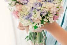 the flowers / by tessa trott