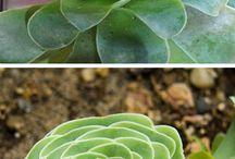 Terrarium succulent cactos / by Gisa
