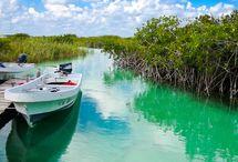 Riviera Maya / Travel ideas in Riviera Maya / by Elizabeth Larkin