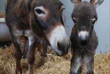 Donkeys / Donkeys, burros, mules... / by ** Cheryl **