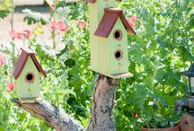Here birdie, birdie / by Evelyn Bartosch
