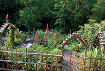Veggie Gardening / by Vickie Moews
