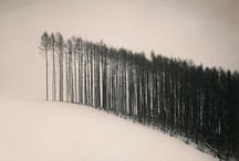 Trees / I am obsessed with beautiful, barren, ominously breathtaking trees.  Can't get enough.  / by Joan Allen