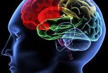Brain / by Medicines Mexico