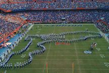 This is gator country!!!! / All things gators!!! / by Krystal James