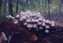 Fabulous Fungi / by Francine Brooks