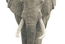 Elephants / by Karen Patterson