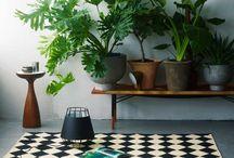 Indoor gardening / by Rachel Saldana