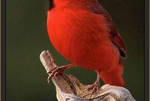 beautiful birds / by Dana Phillips
