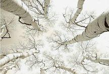 Beautiful Nature / by Cheryl Smith