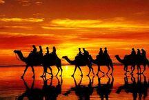 Camels / by Linda Meleyal