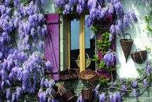 Purple / by Heather Bailey